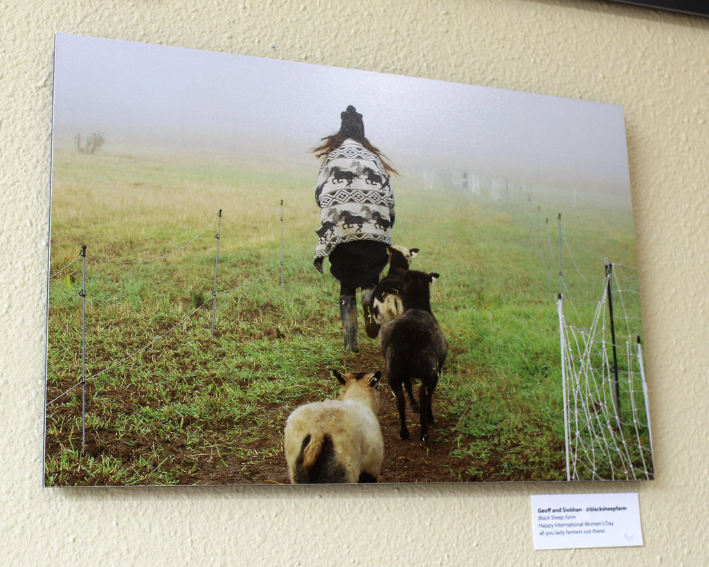 Some of the photos included in the Food Culture of Southwest Washington art exhibit, sponsored by Slow Food Southwest Washington and now on display at the Angst Gallery, 1015 Main St., Vancouver, connect Clark County art-lovers to some of the area's farmers, including the farmer from Black Sheep Creamery in Adna, Wash., shown here. Photo by Kelly Moyer