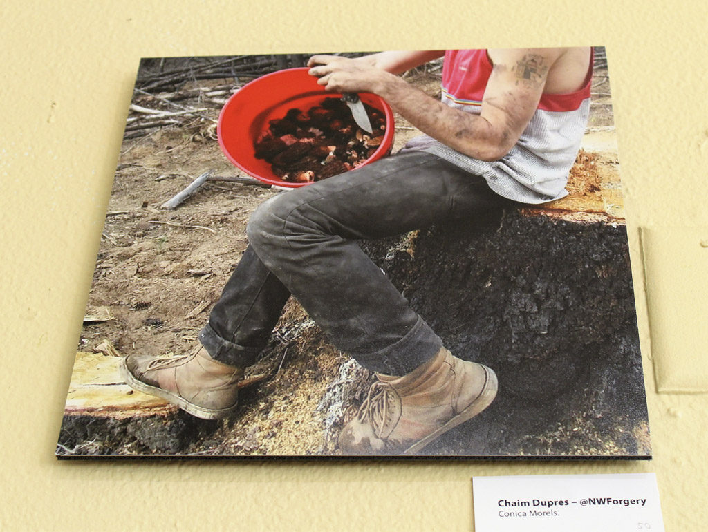 Chaim Dupres, shown here harvesting morel mushrooms in one of the photographs highlighted in the Food Culture of Southwest Washington art exhibit at Angst Gallery in downtown Vancouver, is a young member of the Cowlitz Indian Tribe who forages for native edibles and sells his harvested tubers, greens and other in-season foods to local restaurants and chefs. Photo by Kelly Moyer