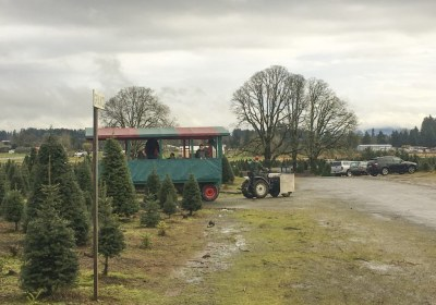 thorntons-treeland-vancouver-washington-30