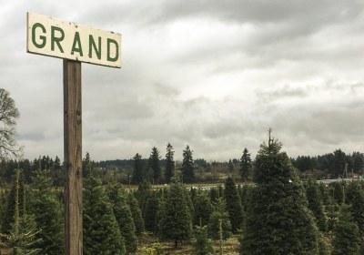 thorntons-treeland-vancouver-washington-31