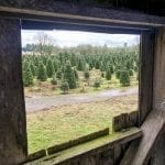 A family tradition: Thornton's Treeland