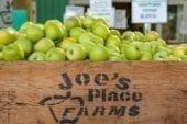 Joe's Place Farms pumpkin patch offers pumpkins, corn maze and more
