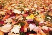 Coupons provide free leaf disposal at four locations in Clark County