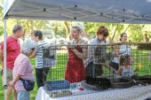 Furry Friends offers microchipping and cat adoption at the Peace and Justice Fair