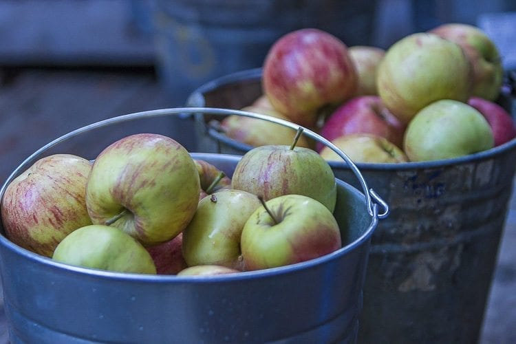 In what is an annual tradition at the Cedar Creek Grist Mill, visitors gathered on Sat., Oct. 28 to watch as fresh apples were pressed into fresh apple cider during the mill's apple cider pressing. Photo by Mike Schultz