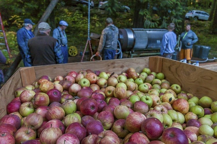 At the Cedar Creek Grist Mill's annual apple cider pressing day, volunteers pressed 12.5 large bins of apples into cider. Photo by Mike Schultz