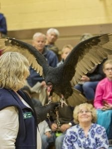 Ginnie Ross, a volunteer for the Audubon Society of Portland with Ruby, a turkey vulture during the live bird show at View Ridge Middle School. The turkey vulture is the 2017 BirdFest Bird of the Year. Photo by Mike Schultz.