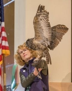 A great horned owl named Julio, handled by Audubon volunteer Katy Ehrlich, displays her wingspan at the Wild Birds of Prey presentation. Photo by Mike Schultz