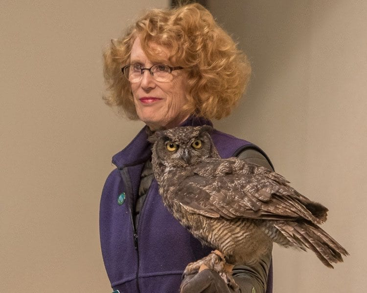 The great horned owl Julio, like all the birds displayed by the Audubon Society of Portland, had been brought to the society for care and could not be released into the wild, so the Audubon Society uses the birds to help interact with the public. Photo by Mike Schultz
