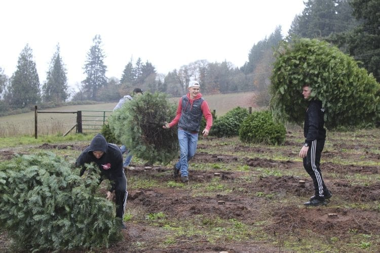 Members of the youth outreach movement Flash Love were eager and excited to deliver Christmas trees to families in need, and worked quickly and excitedly to pick up the trees donated to the organization. Photo by Alex Peru
