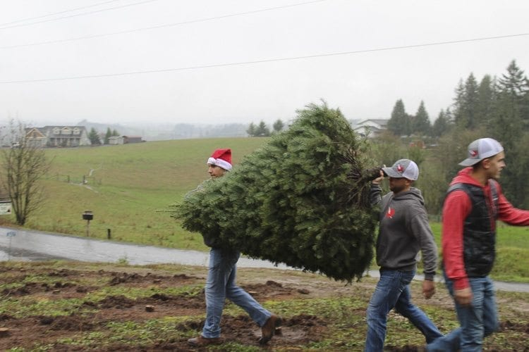 Flash Love leaders Andrey Ivanov (left) and Paul Girard carry a Christmas tree to a tree baling machine before it is loaded onto a school bus to be delivered to local families in need. Photo by Alex Peru