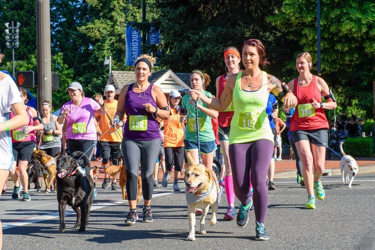 "The Walk/Run for the Animals is an annual fundraising event hosted by the Humane Society for Southwest Washington that allows participants to run with their dogs, and is the culmination of a ""season of fundraising"" for the Humane Society, according to Vice President of Marketing Denise Barr. Photo courtesy of the Humane Society for Southwest Washington"