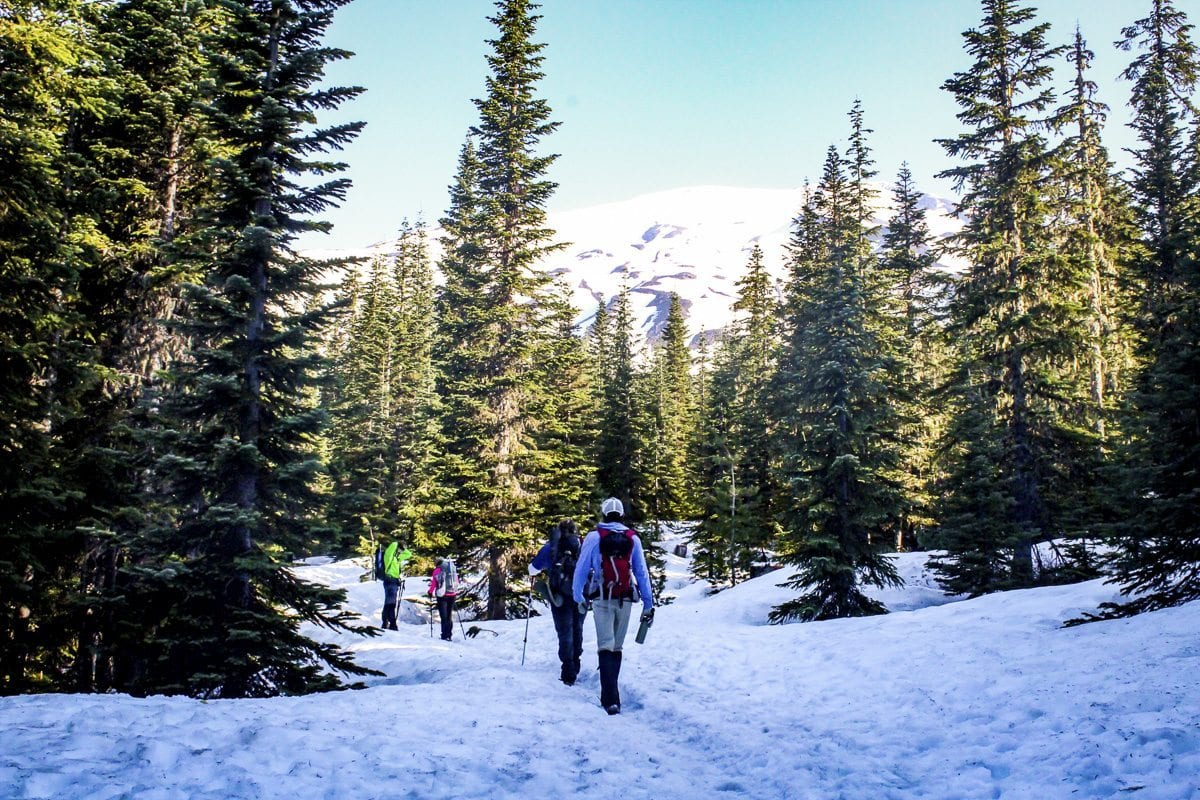 Hikers walk through the trees as Mount St. Helens looms in the background. Photo by Eric Schwartz