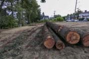 Camas residents throw shade at city's new urban tree policy