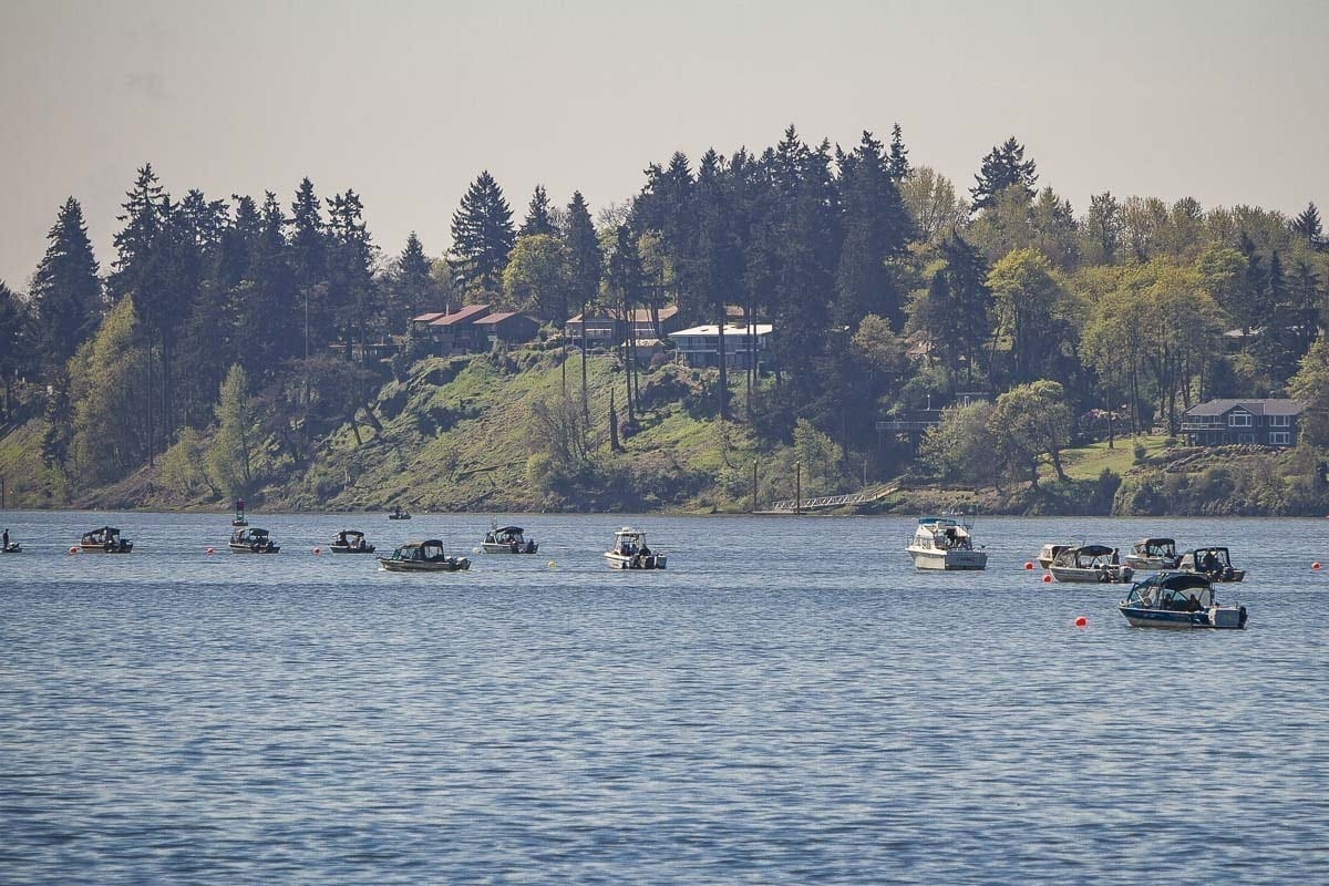 """State fishery managers have declared a """"night closure"""" for salmon and steelhead fishing effective Sat., Aug. 18 on a large stretch of the Columbia River and two of its tributaries due to concerns about this year's summer steelhead run. Photo by Mike Schultz"""