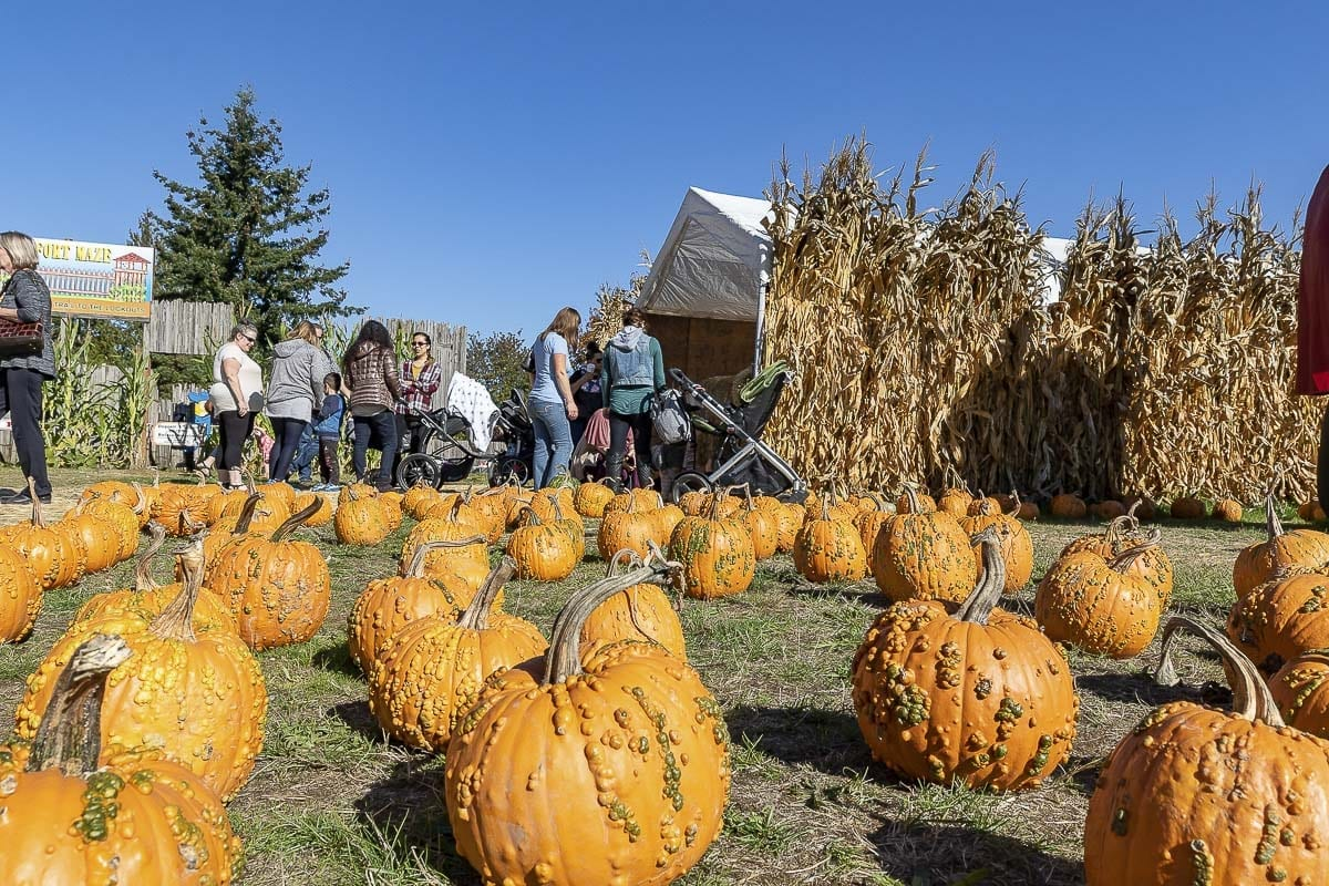 Elementary school kids on a field trip explore Joe's Place Farms during the pumpkin patch season. Photo by Mike Schultz