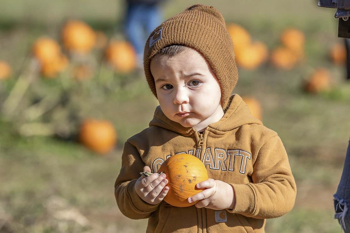 River McPoil holds his newfound pumpkin at Pomeroy Farm's Pumpkin Lane last week on Oct. 14. Photo by Mike Schultz