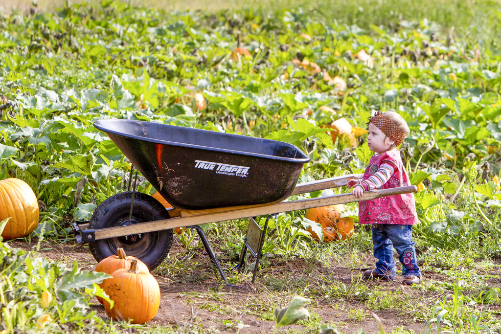 With October fast approaching, area residents must decide where they will go to start their search for the 'Great Pumpkin.' Photo by Mike Schultz