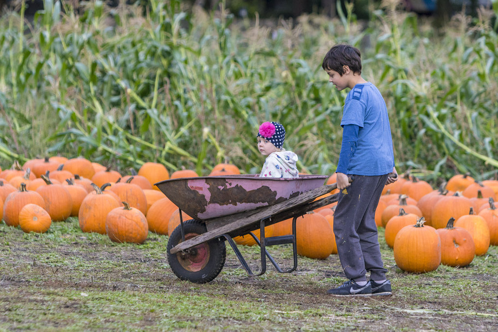 Karill Smagina (right) and his sister Sonya Smagina, of Vancouver, stroll around the pumpkin patch at Joe's Place Farms in Vancouver. Photo by Mike Schultz