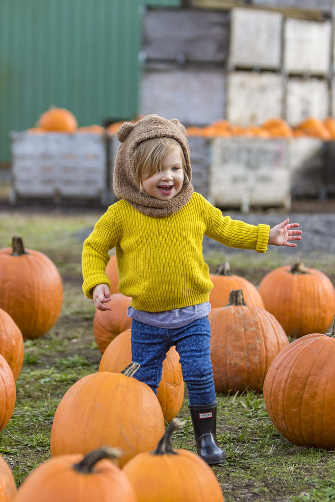 Frankie Boyle, 2, of Vancouver, searches for the perfect pumpkin at Joe's Place Farms pumpkin patch in Vancouver. Photo by Mike Schultz