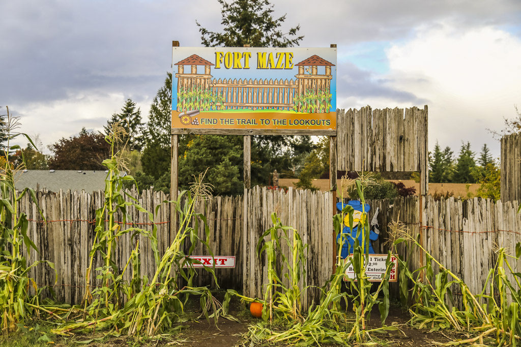 Those who visit the pumpkin patch at Joe's Place Farms in Vancouver can enjoy a stroll through the Fort Maze for $2 per person. Photo by Mike Schultz