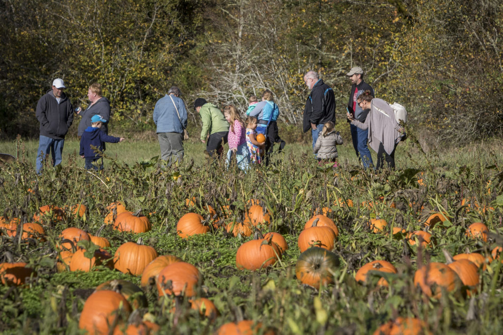 Visitors to Pumpkin Lane at the Pomeroy Living History Farm search for the perfect pumpkin or two in the farm's pumpkin patch. Pumpkin Lane will be open for one more weekend this upcoming Saturday and Sunday. Photo by Mike Schultz