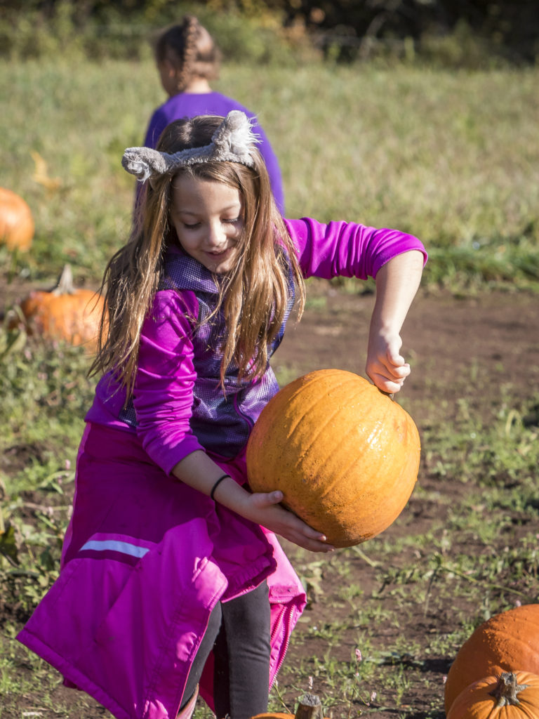Izzy Kinkaid, of Ridgefield, discovers a pumpkin she would like to take home while out in the pumpkin patch at Pomeroy Farm's Pumpkin Lane. Photo by Mike Schultz