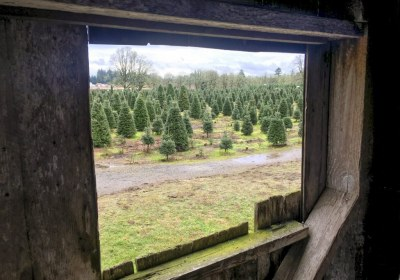 thorntons-treeland-vancouver-washington-33