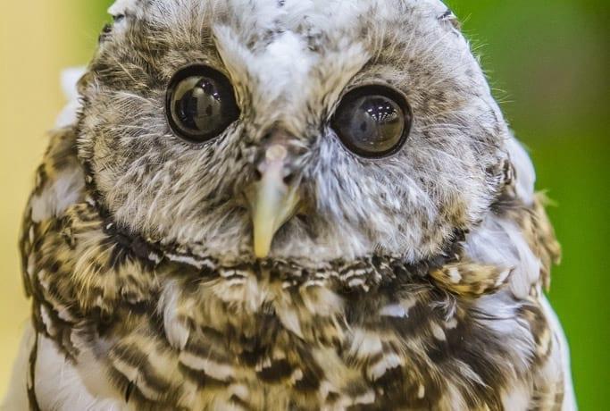 Explore wildlife, Chinookan culture at BirdFest & Bluegrass Celebration