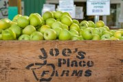 Joe's Place Farms pumpkin patch offers pumpkins, corn maze and more