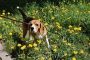 Off-leash area at Pacific Community Park to close for Oct. 22-23 weekend