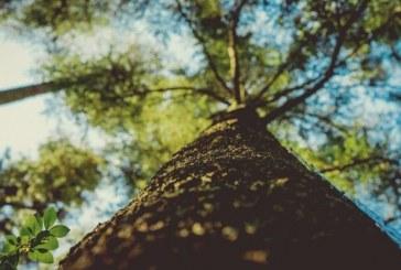 Free Vancouver Treetalk Workshop on hazardous trees set for Nov. 9