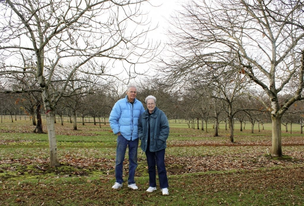 Ray and Carolyn Young stand near the edge of their 20-acre chestnut orchard in Ridgefield. After 20 years of chestnut farming, the Youngs say they're ready for their 'second retirement' and are selling the farm and downsizing to Battle Ground. Photo by Kelly Moyer
