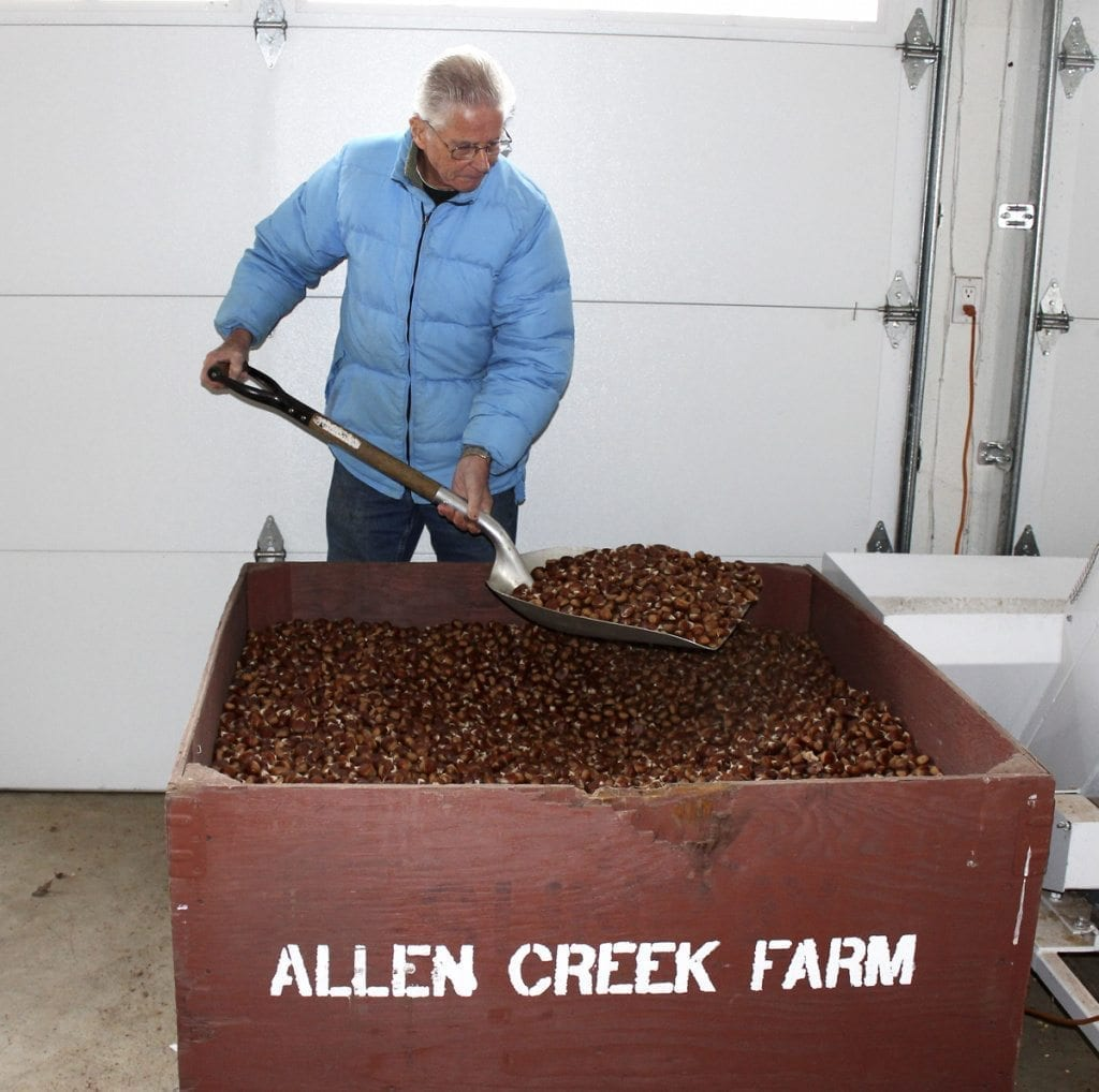 Ray Young turns chestnuts at his Allen Creek chestnut farm in Ridgefield on Tue., Dec. 13. Photo by Kelly Moyer