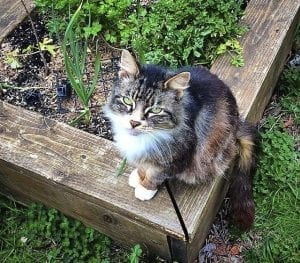 Vancouver City Council to consider 'Community Cat' program for feral cats