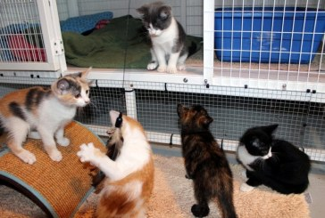 Do you love kittens? Then why not become a foster parent