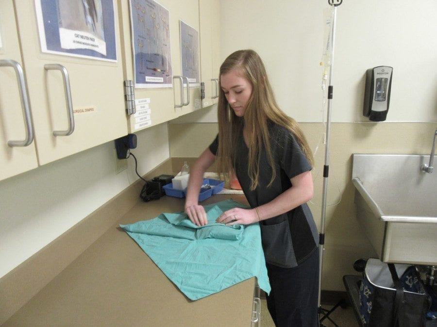Hannah Stuchlik's duties at the Humane Society of Southwest Washington include preparing and wrapping packs of instruments that will be used in surgery. Photo courtesy of Carolyn Schultz-Rathbun