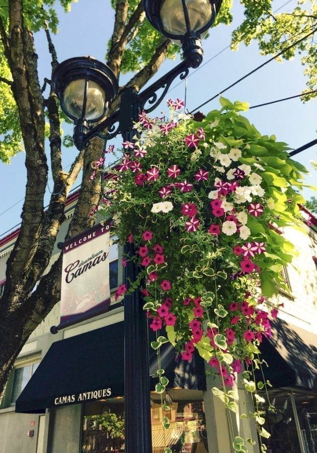 The flower baskets adopted by area residents are designed to add to the small town charm and experience for locals and visitors alike and this is a way for people to contribute directly to the vibrancy of their community. Photo courtesy of Downtown Camas Association