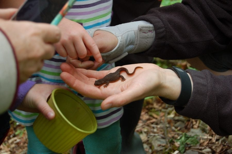 Critter Count participants discover a newt during the 2016 Critter Count event. This year's 17th annual event will be held on Sat., April 8, from 9 a.m.-noon. Photo courtesy of the city of Vancouver