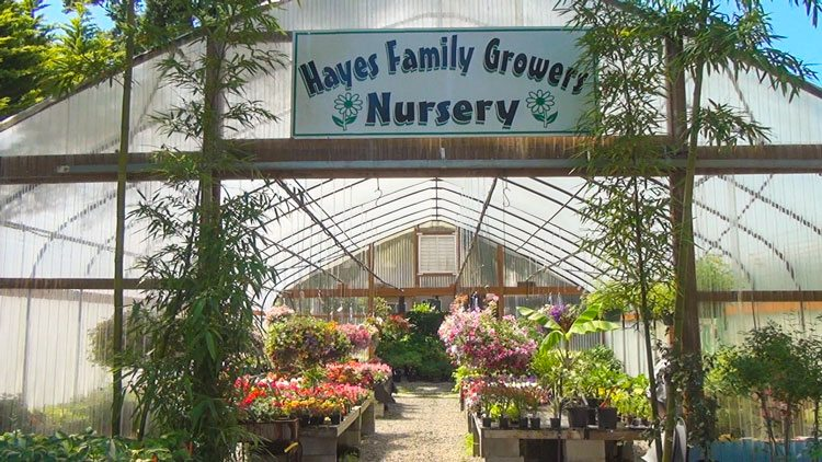Hayes Family Growers is a Vancouver-area nursery owned and operated by Clifford Hayes and members of his family. Photo by Michael McCormic, Jr.