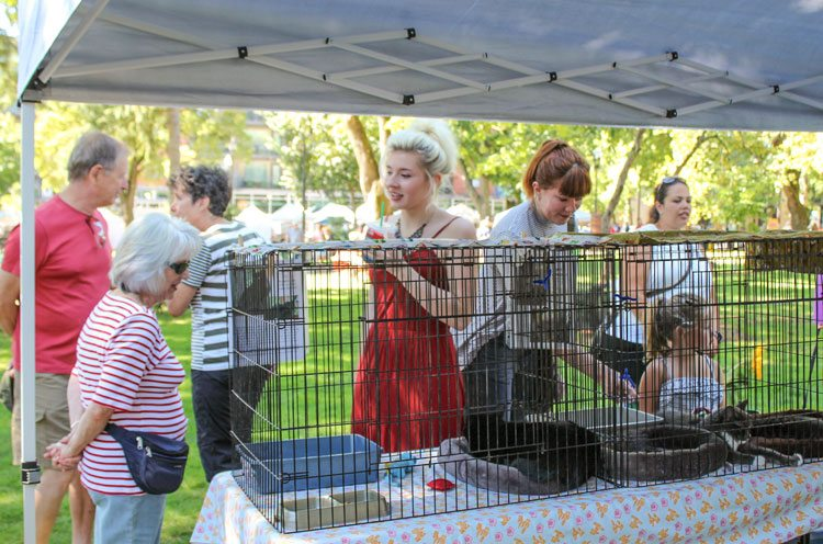 """Area residents are invited to come on out and """"purruse"""" the adoptable cats, talk with the Furry Friends volunteers, relax and listen to music at the Peace and Justice Fair to be held Sat., Sept. 9 at Esther Short Park in Vancouver. Photo courtesy of Diane Stevens"""