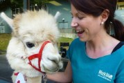 Alpacas, puppies and parrots, oh my!