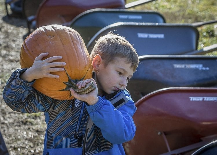 Jace Hanson of Battle Ground carries his pumpkin out of the Pomeroy Farm pumpkin patch Saturday. Photo by Mike Schultz