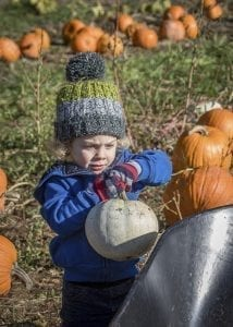 Dylan Christman of Vancouver loads a white pumpkin into his wheelbarrow Saturday at Pomeroy Farm's Pumpkin Lane celebration. Photo by Mike Schultz