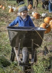 Dylan Christman of Vancouver pushes a wheelbarrow through the pumpkin patch at Pomeroy Farm Saturday in search of the perfect pumpkin. Photo by Mike Schultz