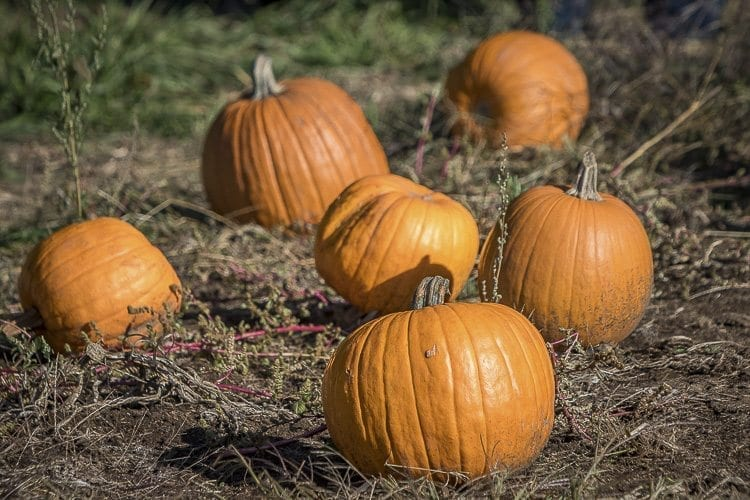 The annual Pumpkin Lane celebration returns every weekend in October at the Pomeroy Farm with hayrides and a pumpkin patch. Photo by Mike Schultz