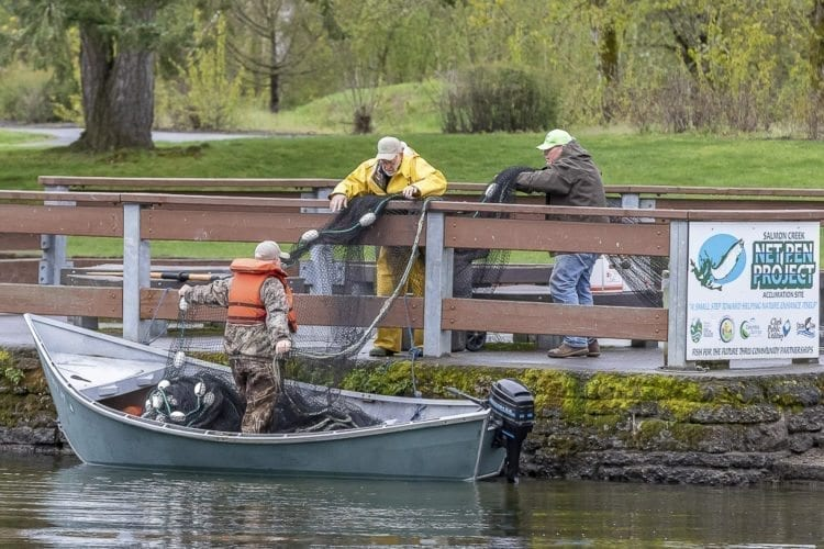 Volunteers work to install netting where hatchery trout were later placed for this weekend's Klineline Kids Fishing derby. Photo by Mike Schultz