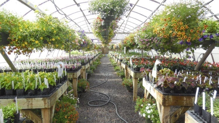 The Battle Ground School District will hold its annual plant and greenhouse sales later this month and in early May. Photo courtesy of the Battle Ground School District