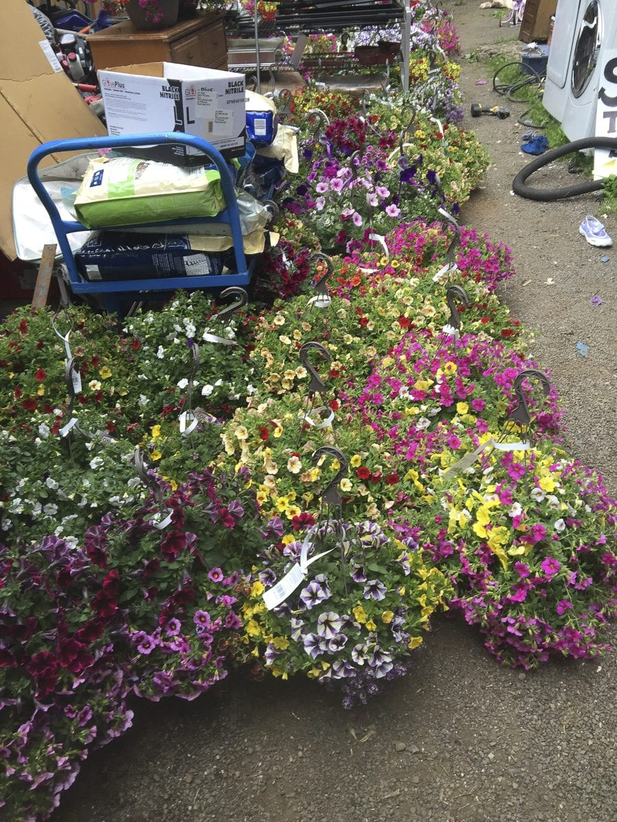 Vancouver police have jailed a 41-year-old man after more than $6,000 in hanging baskets and other merchandise were stolen from outdoor displays at a Vancouver Fred Meyer location. Photo courtesy of Vancouver Police Department