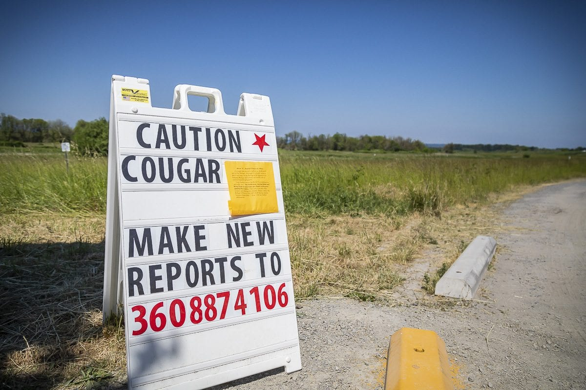 Signs posted throughout the River S unit of the Ridgefield National Wildlife Refuge warn visitors of the possibility of a cougar in the area on Wednesday afternoon. Photos by Mike Schultz